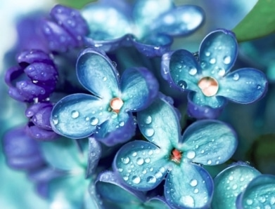 Growing-Blue-Flowers-About-Us